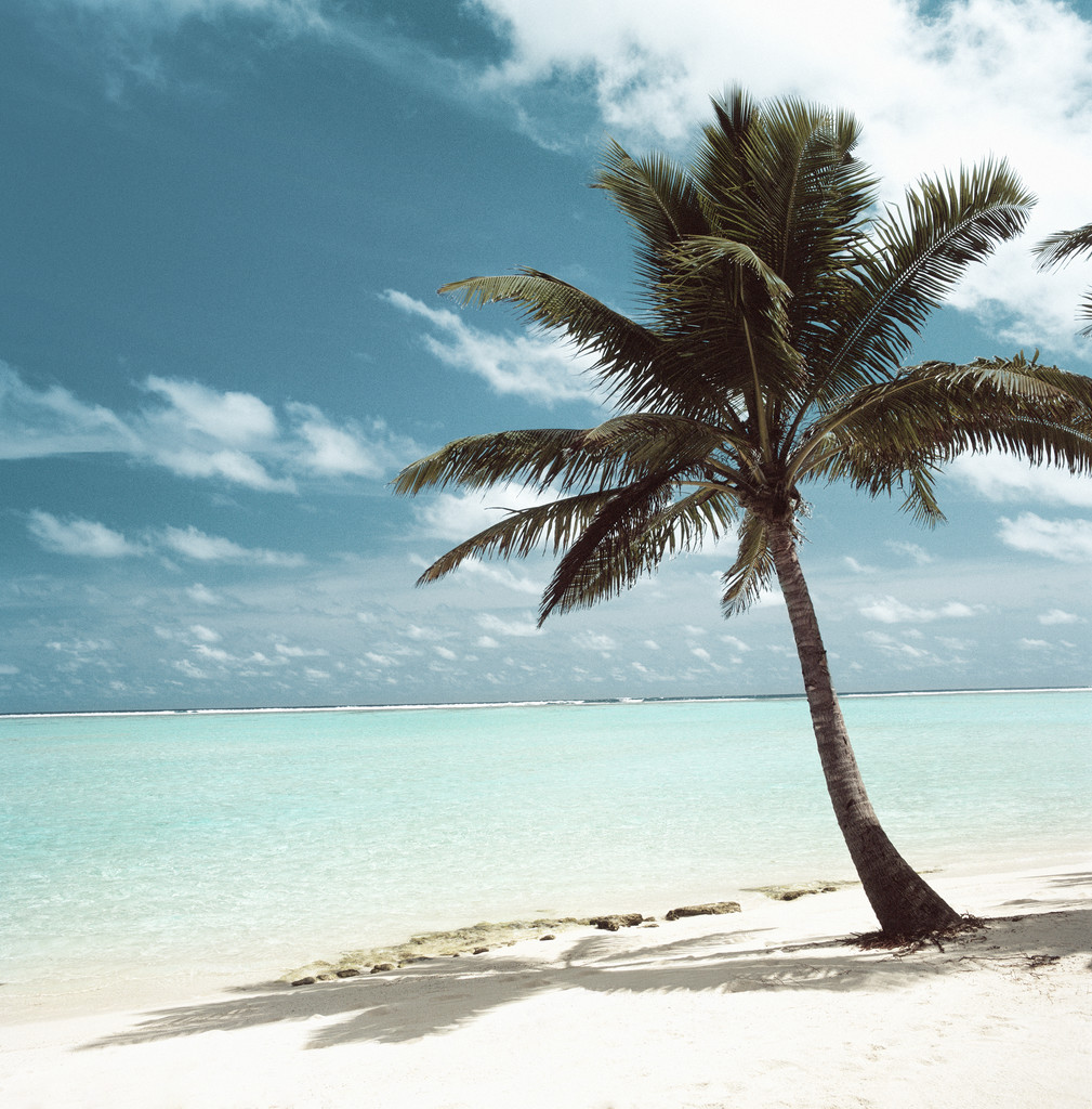 Palm tree on a beach vitality health centers palm tree on a beach voltagebd Image collections